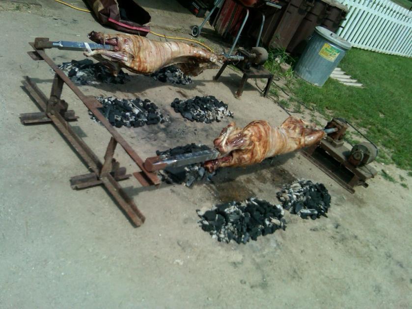 Roasting lambs