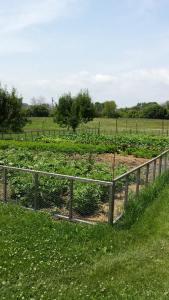 FFFV Garden